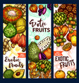 banners of exotic fruits sketch vector image vector image