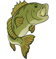fish cartoon vector image vector image