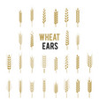 wheat ears icons and logo set cereals icon set vector image vector image