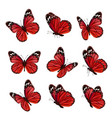 butterflies collection beautiful nature colored vector image vector image