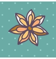 Flat Icon of star anise vector image