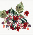 floral background chrysanthemums flowers rasberry vector image