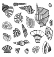 Seashell set collection vector image vector image