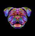 colorful british bulldog on pop art style vector image vector image