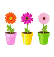 Colorful Daisies In Pots vector image vector image