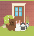 dog cat and rabbit in house garden pet care vector image vector image