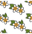 plumeria plant seamless pattern thailand flower vector image vector image