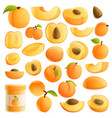 apricot icons set cartoon style vector image vector image