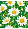 chamomile seamless background vector image vector image