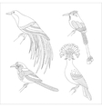Set of tropical birds hand draw on a white vector image