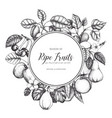 vintage fruits card design vector image vector image