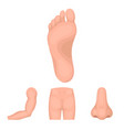 buttocks nose arm foot part of the body set vector image vector image