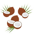 coconut with half and leaves collection of vector image