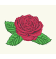 rose bud with leaves painted in watercolor style vector image vector image