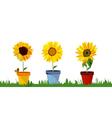sunflower border vector image