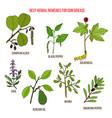 best herbal remedies for gum disease vector image vector image