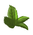 green leaf of a flower vector image vector image