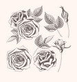hand drawn rose with leaves vector image