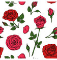 roses pattern red blossom rose flowers bouquet vector image