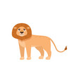 benignant lion stands sideways isolated on white vector image vector image