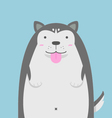 cute big fat Siberian Husky dog vector image vector image