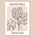 hand drawn monstera sketch line art style vector image vector image