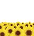 summer meadow sunflowers background vector image vector image