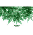 green cannabis or marijuana leaves background vector image vector image
