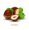 hazelnuts with green leaves on a white background vector image