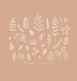 floral leaves set peach vector image