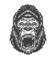 head of gorilla vector image vector image