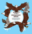 predatory birds sketch eagle or falcon vector image vector image