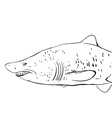 Great White Shark Underwater Sketch Black contour vector image