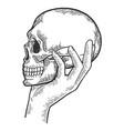 human skull in hand sketch engraving vector image vector image