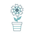 potted aster flower natural petal decoration image vector image