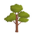 tree nature symbol vector image
