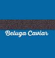 beluga caviar banner in cartoon style vector image