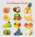 collection fruit and berries watermelon vector image