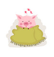 cute cartoon pig covered by blanket isolated vector image