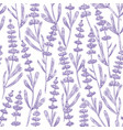 elegant seamless pattern with lavender flowers vector image