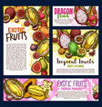 exotic tropical fruits sketch posters vector image vector image