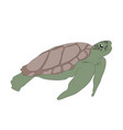 green turtle swim drawing vector image