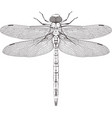 large symmetrical dragonfly vector image