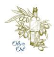 olive oil bottle and olives branch sketch vector image vector image