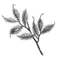 portion fruiting branch halesia hispida vector image vector image