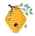 bee-hive swarm icon flat style isolated on vector image