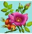 Bright wild rose vector image vector image