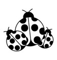 ladybugs insect small icon animal vector image