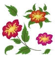 Flowers and green leaves dahlia vector image