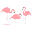 pink flamingo icon set three exotic tropical bird vector image